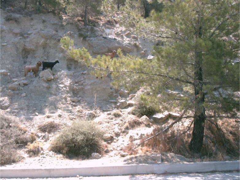 Ferienimmobilie Kreta